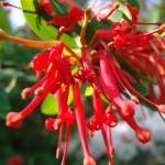 Planta Andina - 3