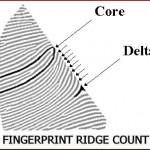 Fingerprint-ridge-count