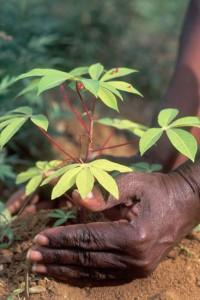 Recursos geneticos - Imágen de FAO - © Pietro Cenini /Panos Pictures