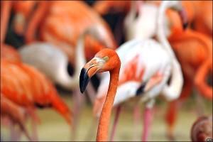 Sequía en América del Sur y su influencia en la migración de aves desde Florida